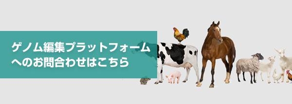 ゲノム編集プラットフォーム