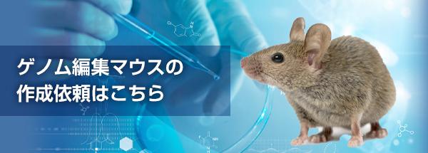 ゲノム編集マウス作成