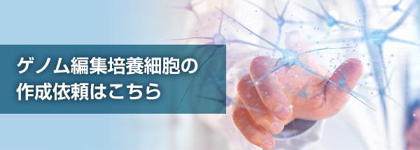 ゲノム編集培養細胞作成
