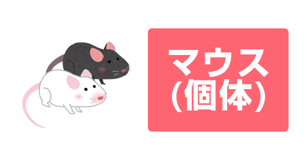 マウス(個体)