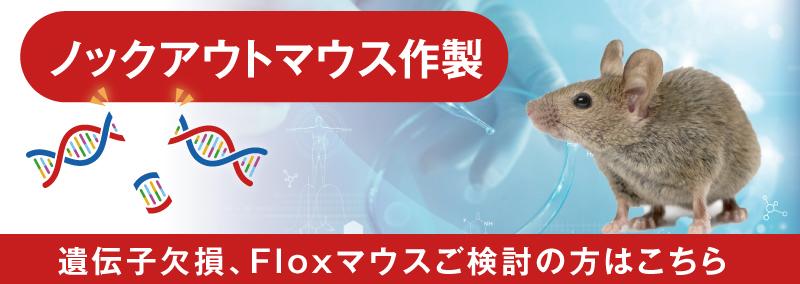 ノックアウトマウス作製:遺伝子欠損、Floxマウスご検討の方はこちら