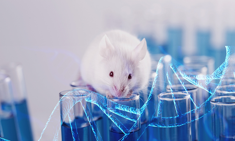 Genome-Edited Mouse